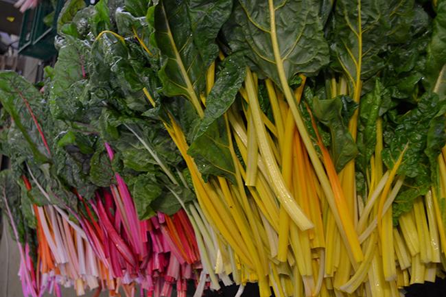 Mangold - So bunt ist der Spätsommer bei Stoffers Gemüsebau
