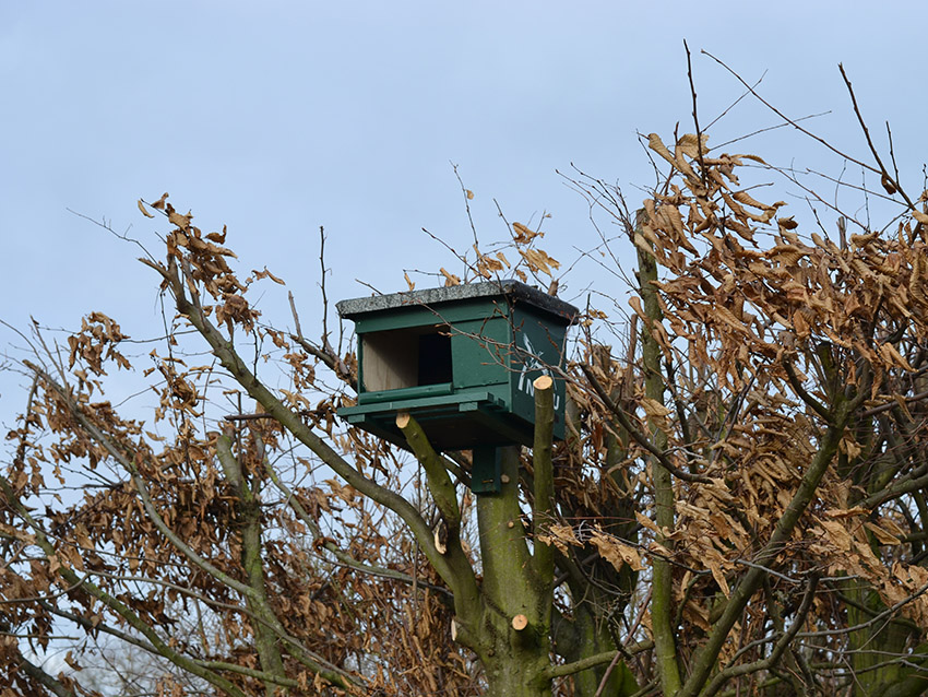 Stoffers Gemüsebau Krefeld - Artenschutz-Turmfalkenkasten